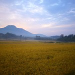 Dawn over rice fields